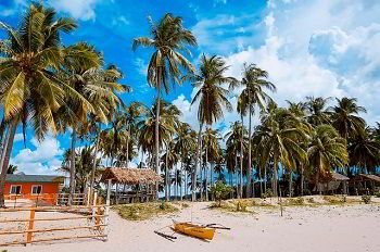 rural banks in the philippines-palms